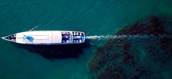 FoT2021 - Cruises