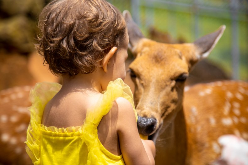 File photo of a toddler and deer.