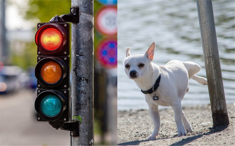 Traffic lights dog and lamppost