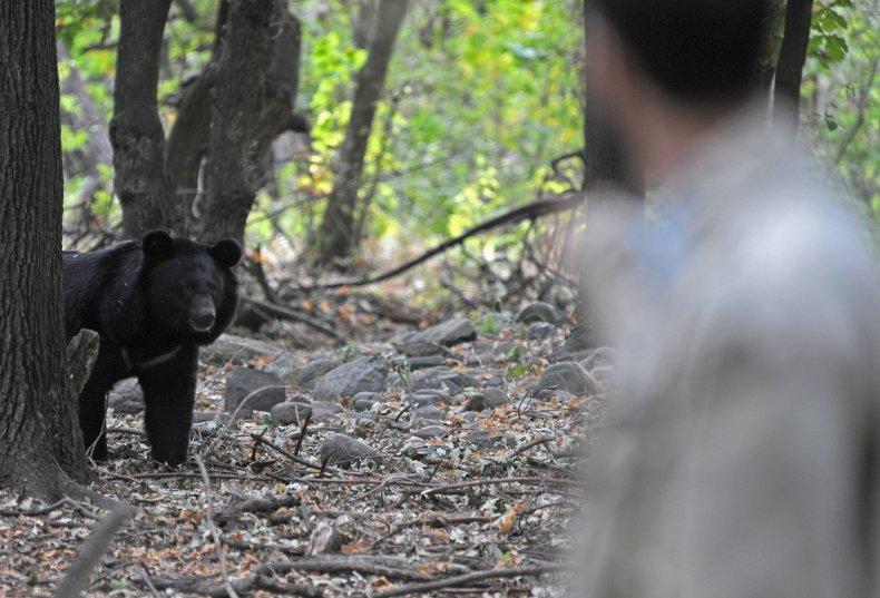 black bear pennsylvania attack megan alborg