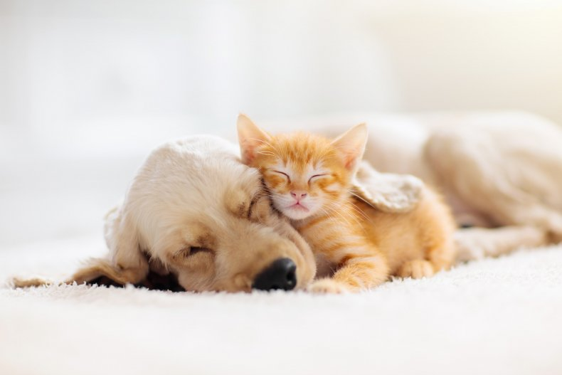 Cat and kitten napping
