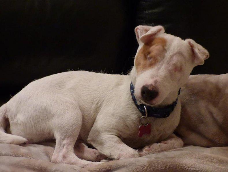 Rosie the dog.