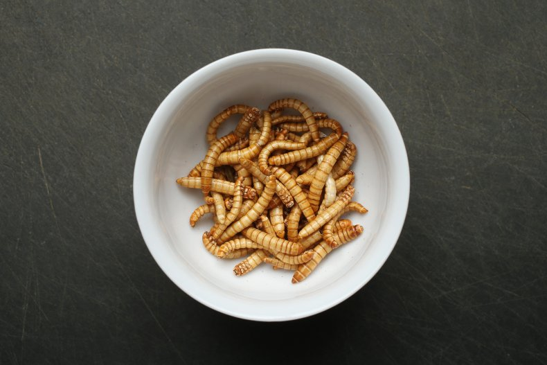 Mealworms in Bowl