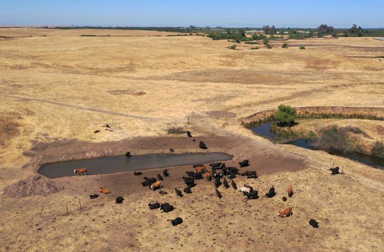 Cattle Ranchers