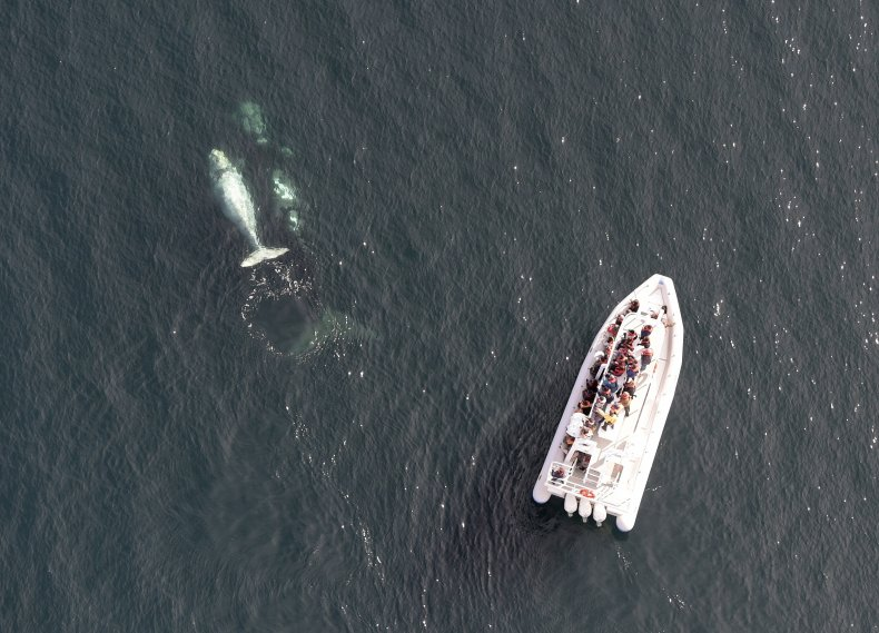 Whale-watchers spots a mother and white calf.
