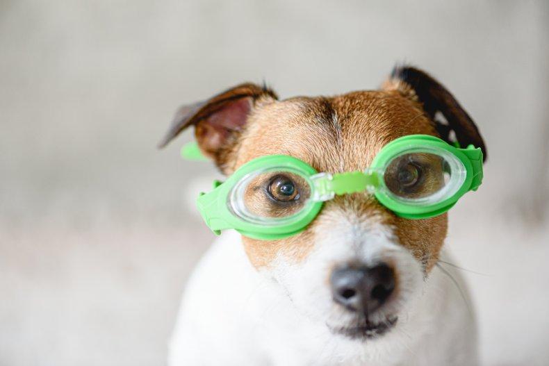NH Dog Walking Club Doggy Olympics fundraiser