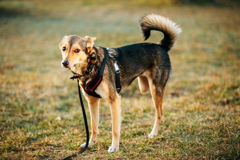Dog with three legs