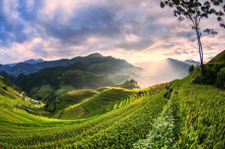 Rice fields in northwest Vietnam.