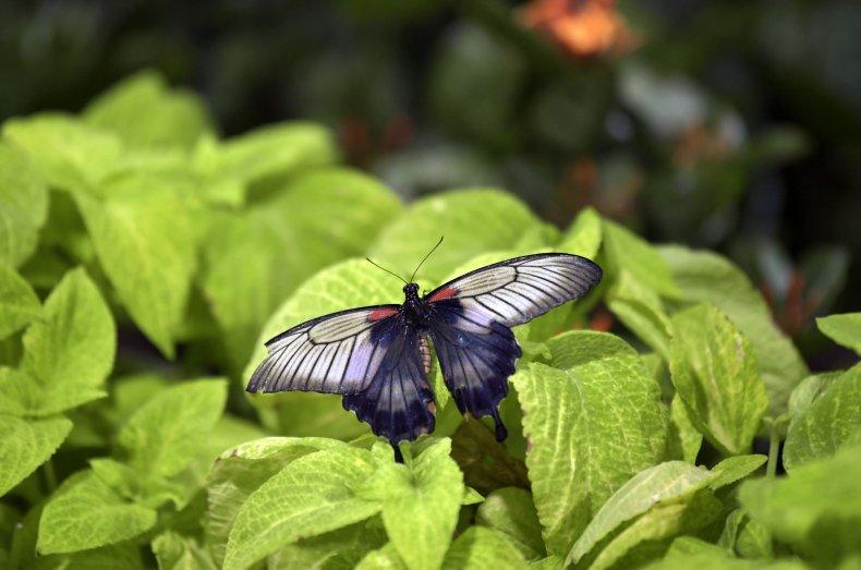 A butterfly in Dubai's Butterfly Garden.