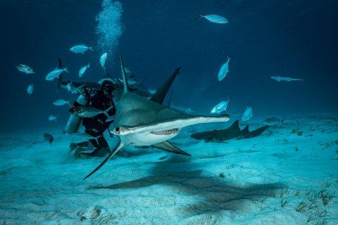 Shark Research Dive Bimini