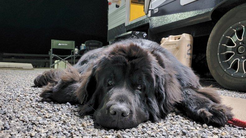 Dog laying by RV