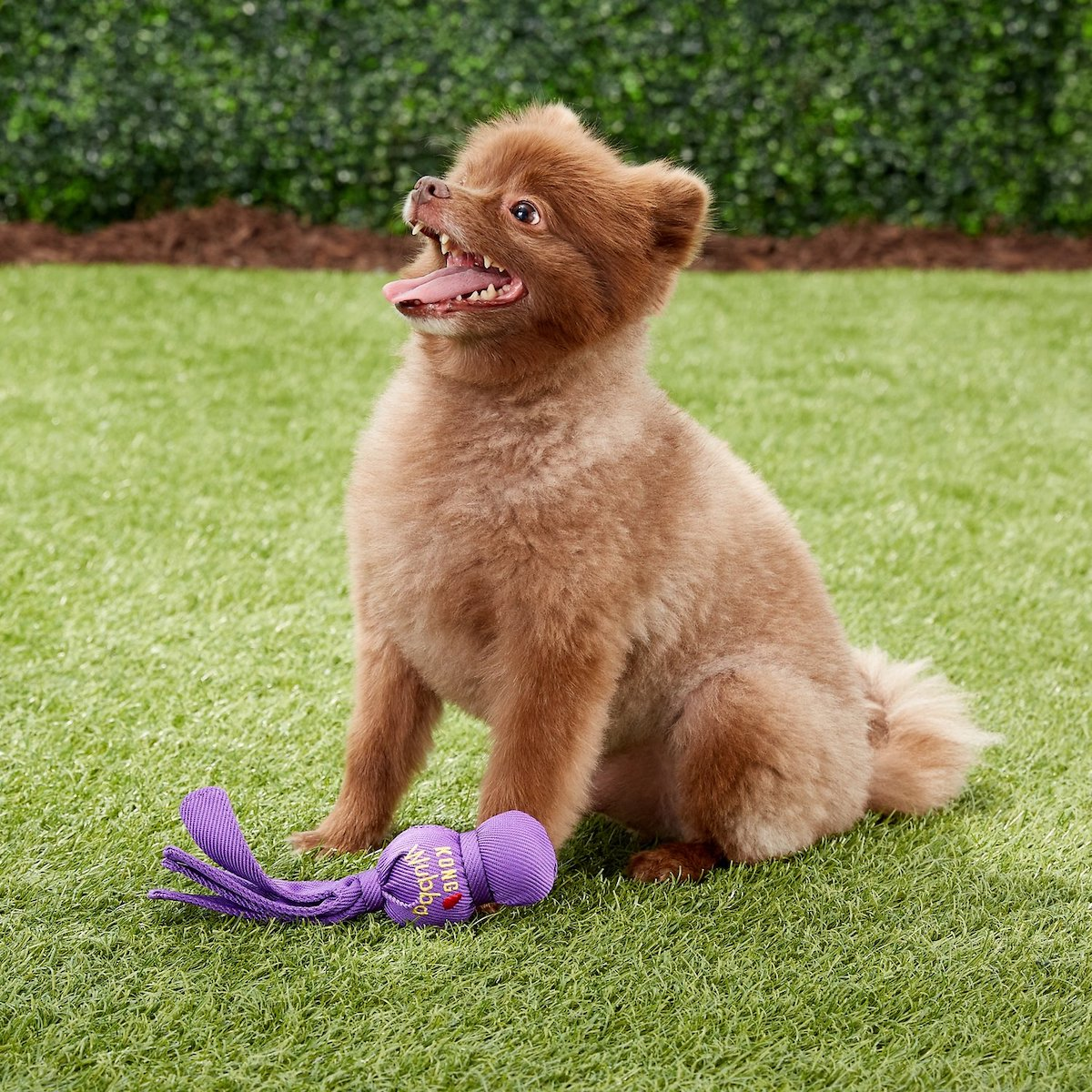best dog toys for small breeds 0