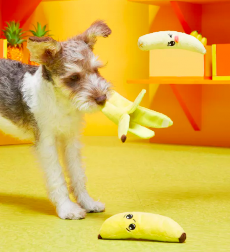 best dog toys for small breeds 10