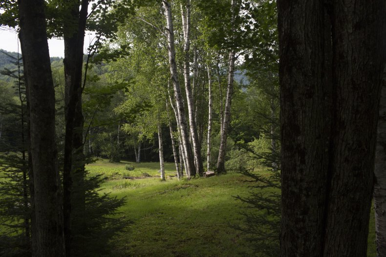 Forest in New Hampshire