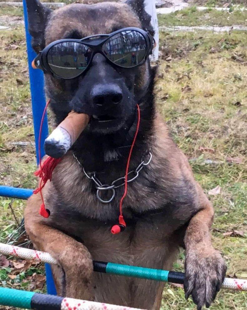 Wonderdog-zenger