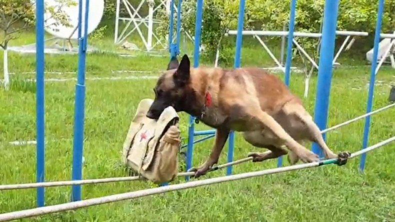 Tightrope dog - zenger