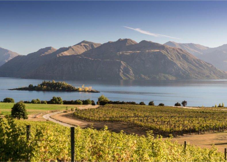 New Zealand - Rippon Winery, Central Otago Region, Lake Wanaka