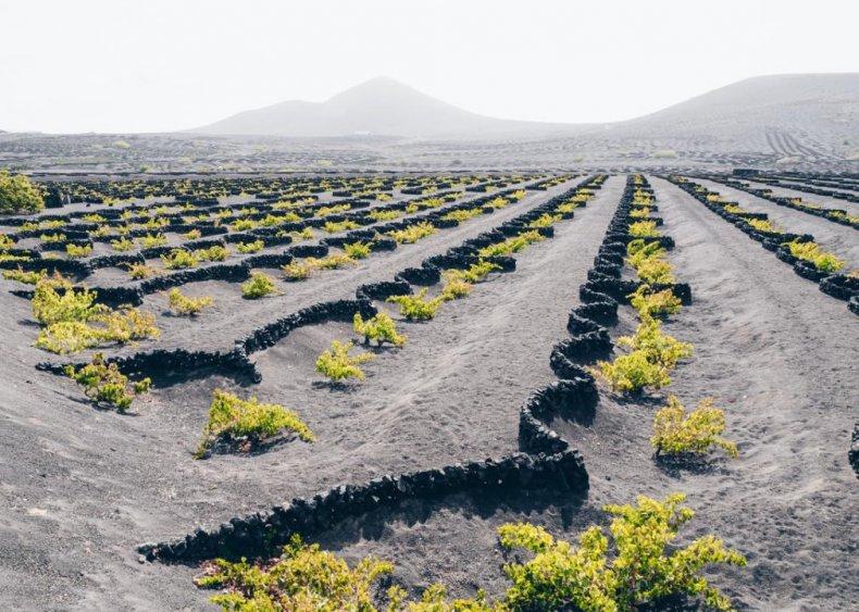 Spain - La Geria, Lanzarote, Canary Islands