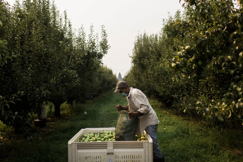 An orchard worker