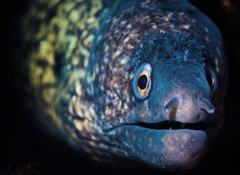Mediterranean moray, photographer