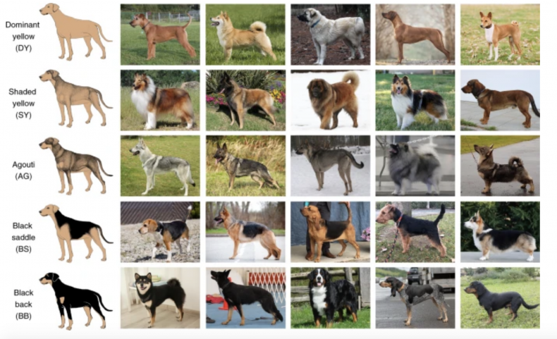 The five distinct patterns of dog coats.