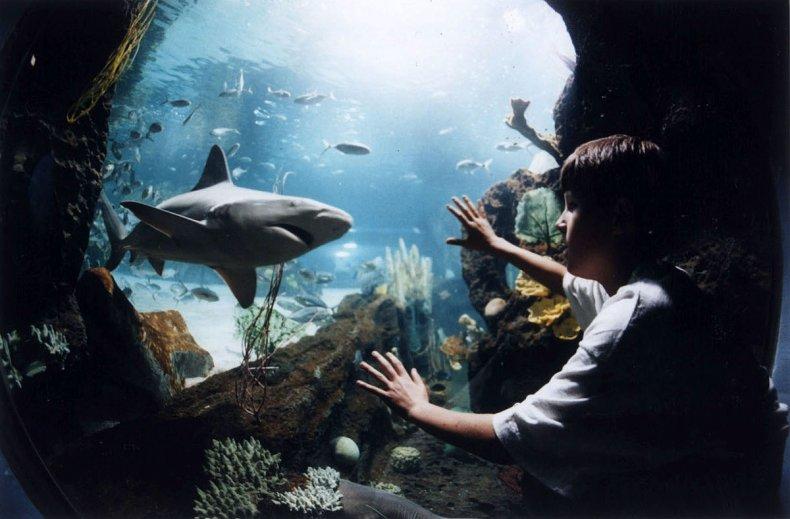 Shark Exhibit New POrt Aquarium