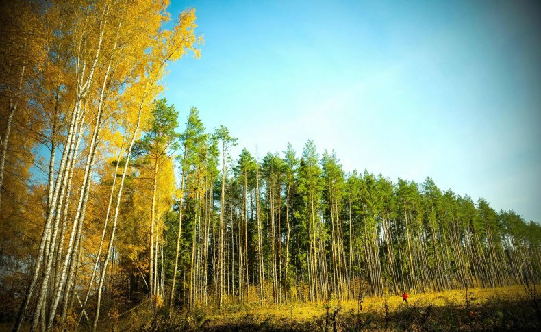 Forest Outside Moscow