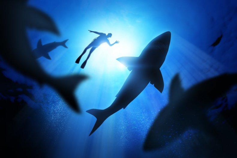 A diver near a great white shark.