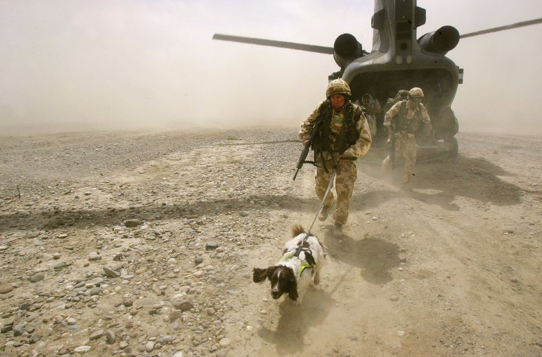 A sniffer dog in Afghanistan in 2006.
