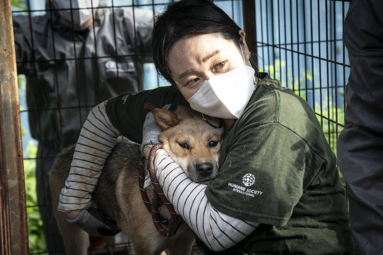 Activist rescues dog from meat farm
