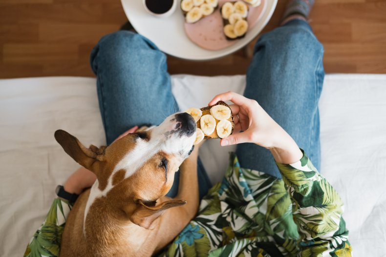 A dog eating peanut butter and banana.