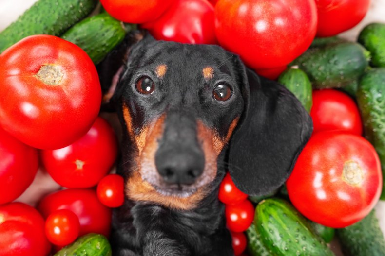 A dog with tomatoes and cucumbers.