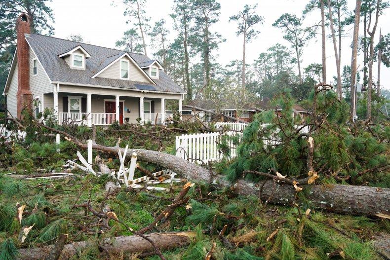 Fallen Trees in Louisiana