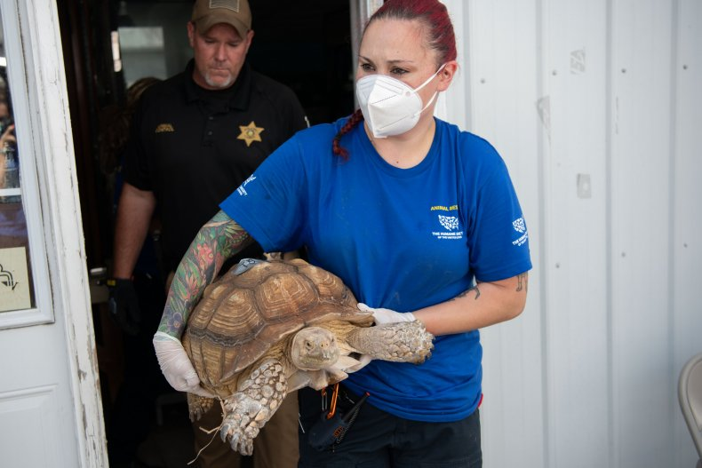 A woman holding a large turtle