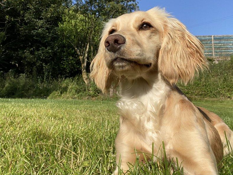 Viral Cricket Dog Dazzle