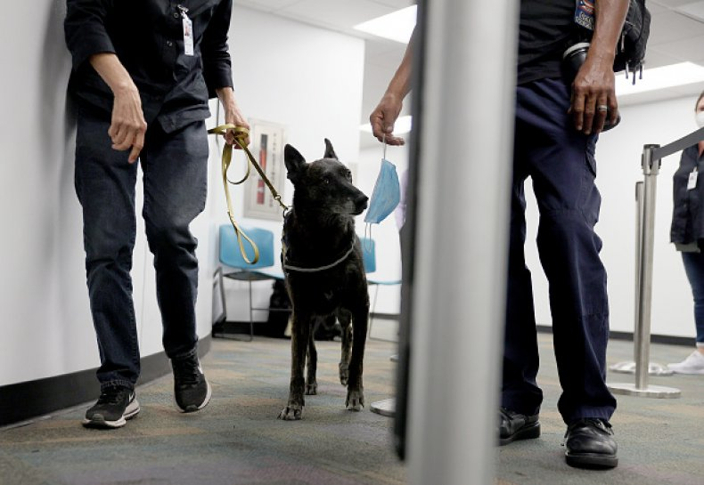 Dogs Canine COVID Miami Airport Sniff Test