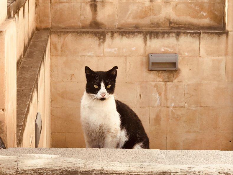 Stray cat in Egypt