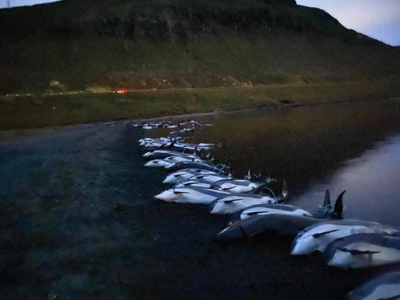 Dolphins massacred Faroe Islands