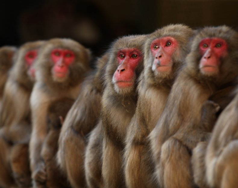 The monkeys could enter the base again