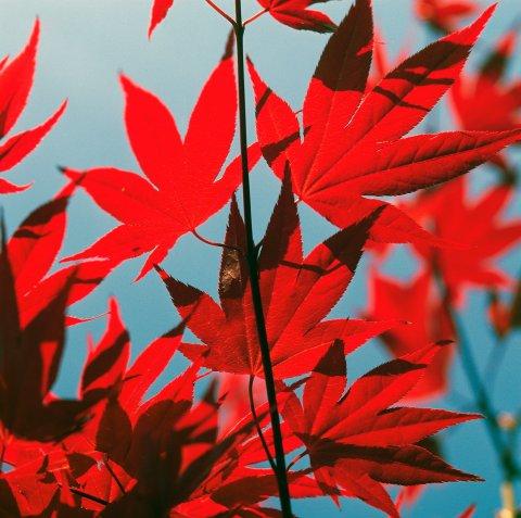 CUL Map Fall Foliage 09