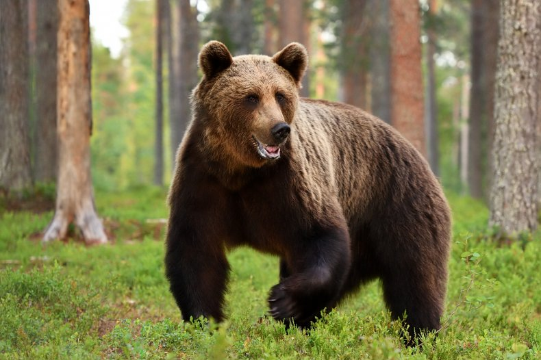 File photo of a bear.
