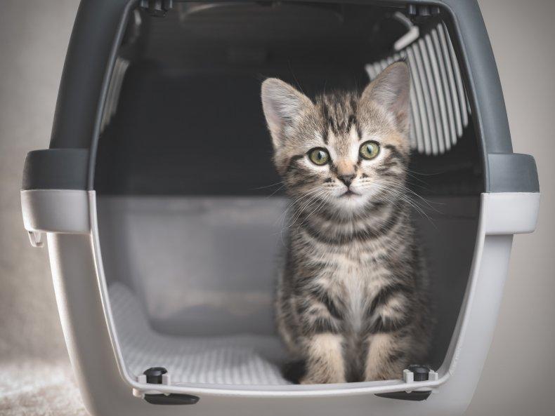 A kitten in the carrier.