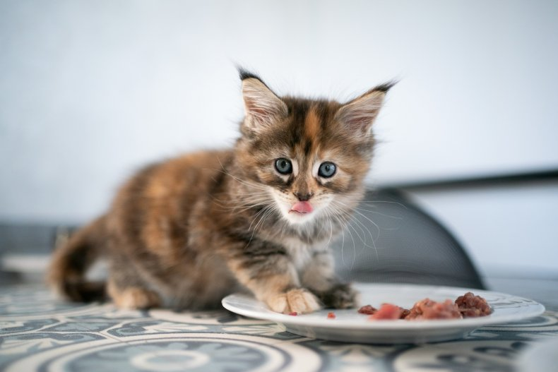 A kitten eats food from the plate.