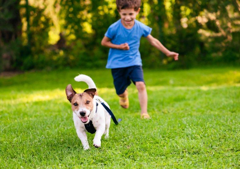 A boy chasing a puppy.