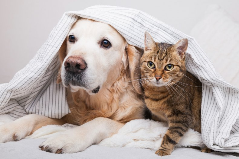 Dogs and cats under the sheets.