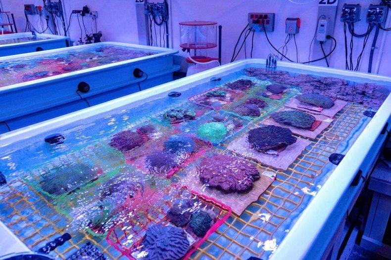 Saving Coral in Florida