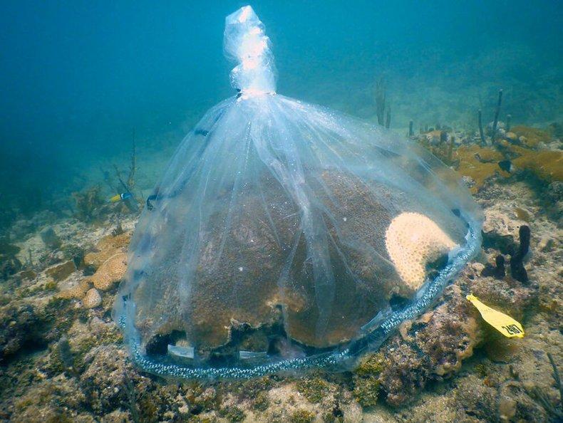 Probiotics to help coral