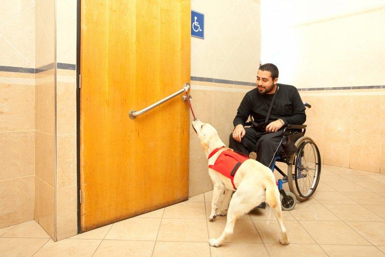 Trained dog assists a man.