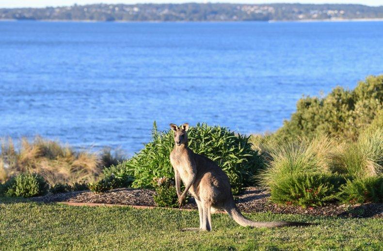Kangaroo in Lake
