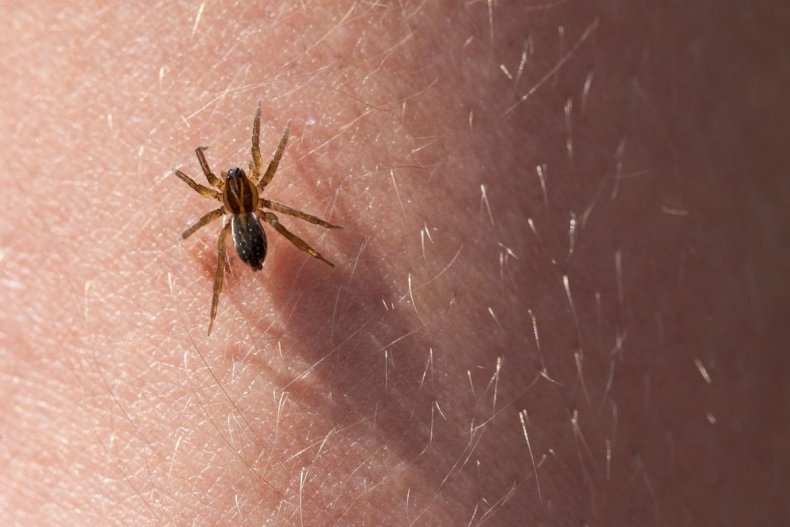 Stock image of spider on skin